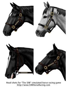Head shots of horses-Group 125