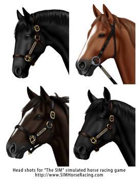 Head shots of horses-Group 127