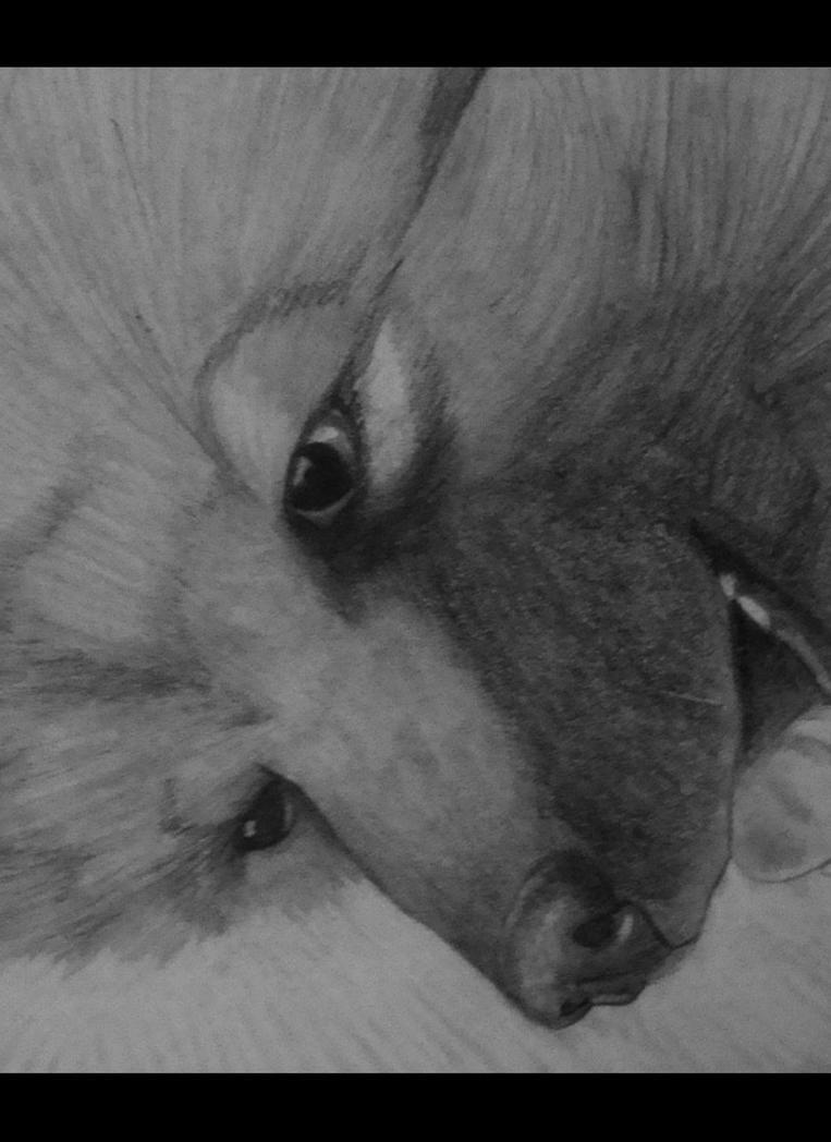 Der Wolfspitz by medievalgoddess