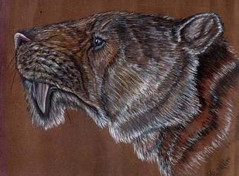 Machairodus megantheron by liliensternus