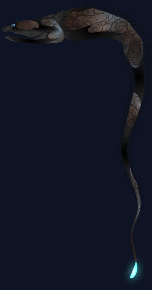 how to draw a gulper eel