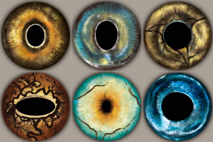 Animal Eye Oil Painting