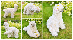 Flowery Alpaca