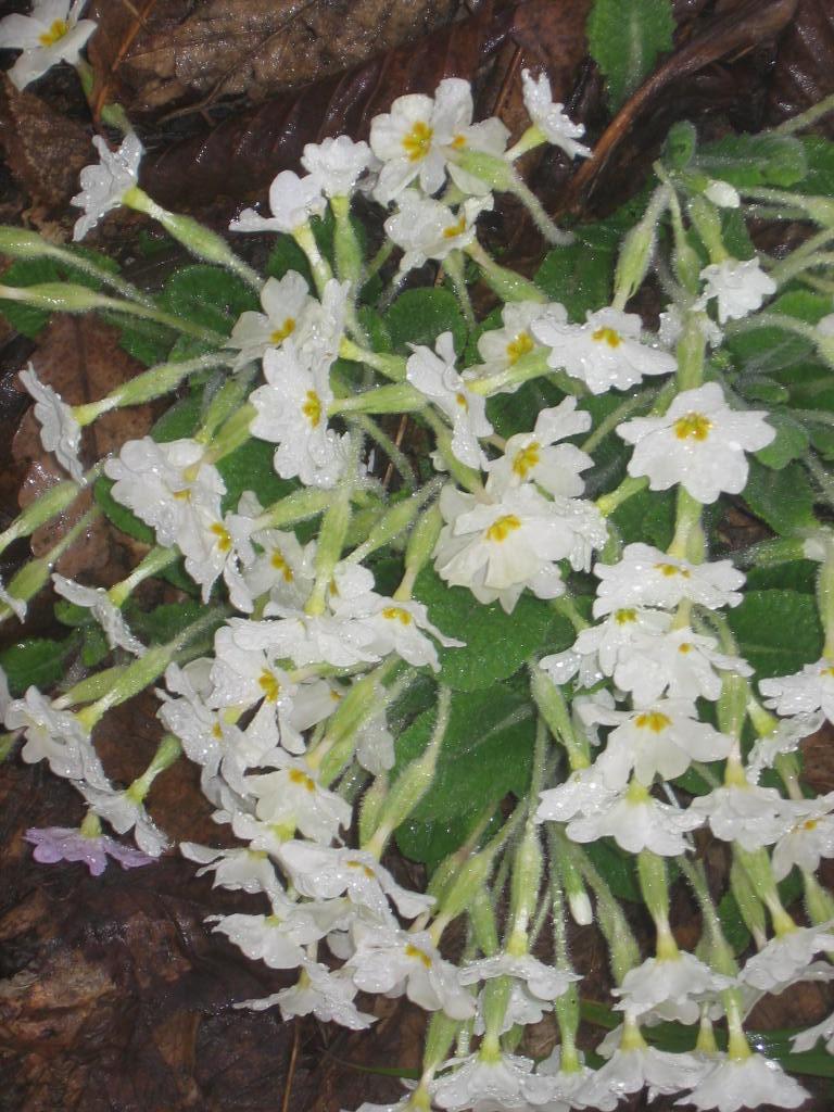 bahar by benim-deviantart
