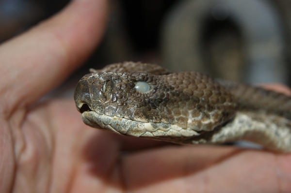 snake by benim-deviantart