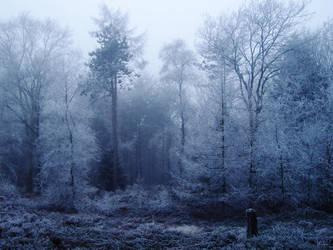 Misty Forest by LaMusaTriste
