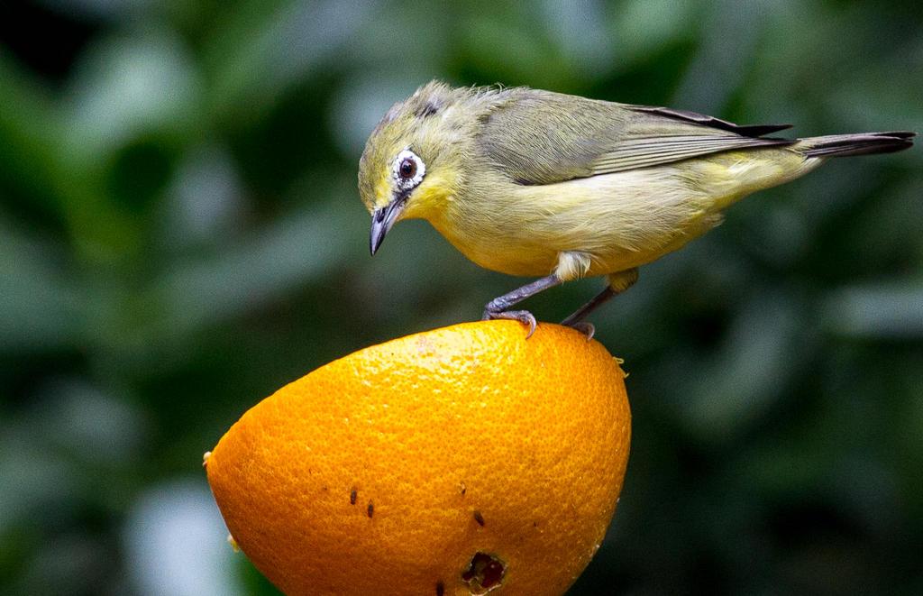 Vitamin C by nigel3