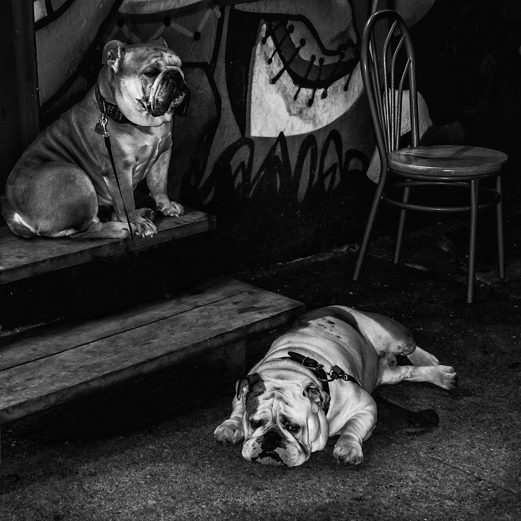 Dogs 2 by nigel3