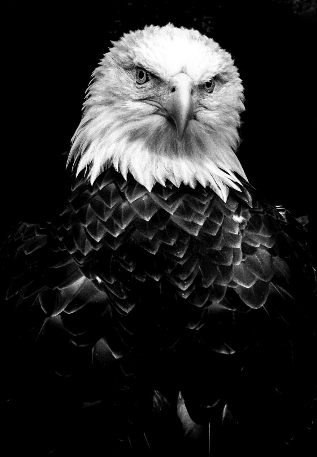 Eagle BW by nigel3