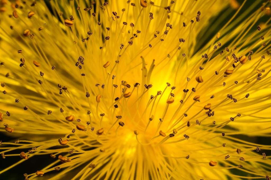 Yellow World by nigel3