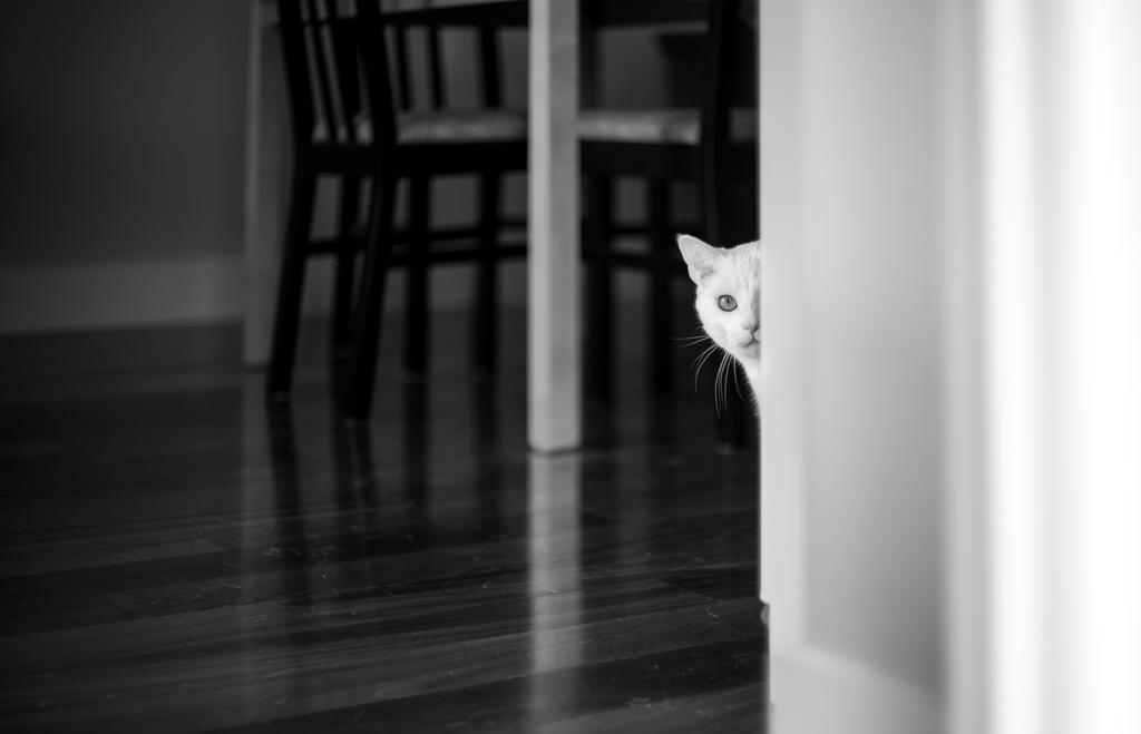 Curiosity by nigel3