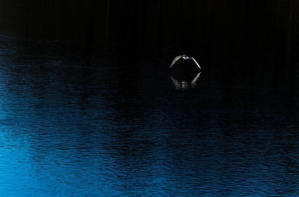 Blue flight by nigel3