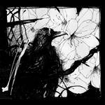 The Crow and flowers