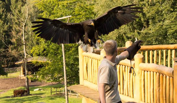 Black Eagle Landing