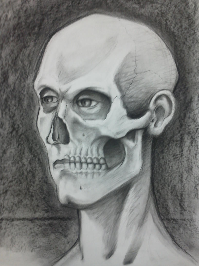 Skeleton Face Line Drawing : Figure drawing face skull by j chant on deviantart