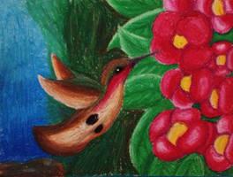 Hummingbird by XanderGirl96