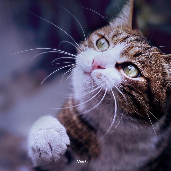 cat  .. by nuke001