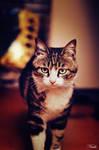 cat0709 by nuke001