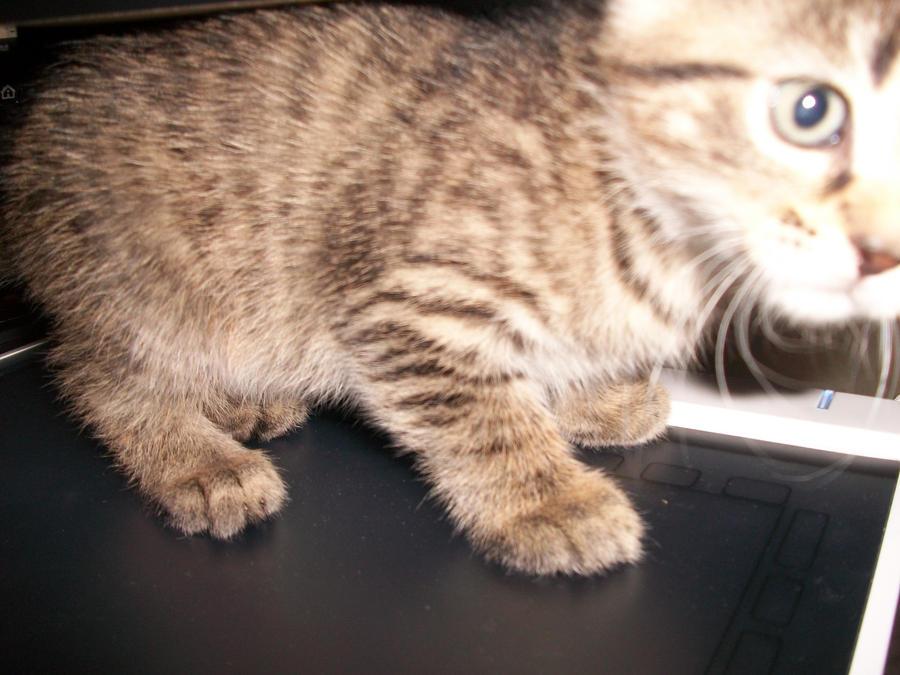 Kitty wants to draw! by ChrissyAi