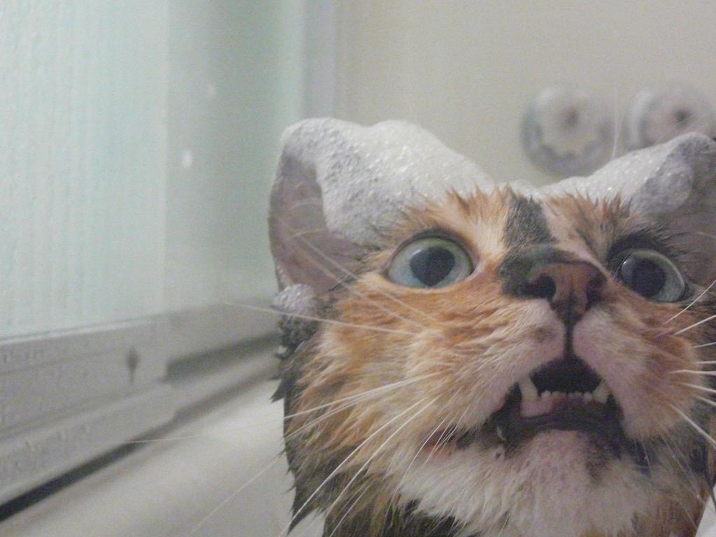 Bath Time by Satanizmihomedog