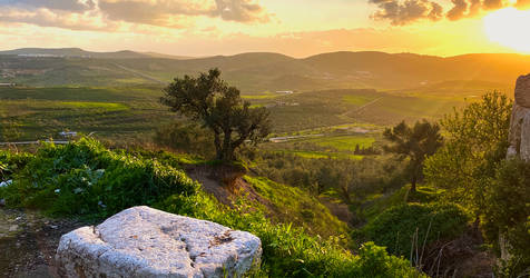 Countryside - Palestine by EYADSTUDIO