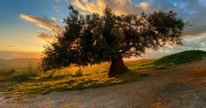 Countryside - Palestine