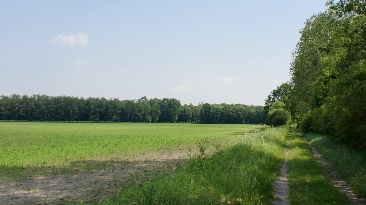 On Tour In Summer 0007 by Sternenmaschinebine