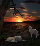 Entre chien et loup .