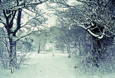 Winter Wonderland by CharBop