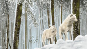 Wolves wandering through snow