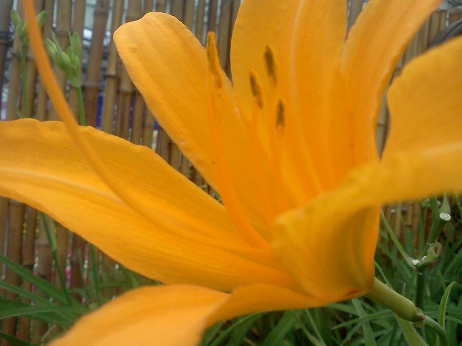 Flower XVI by XxDarkxDeathxX