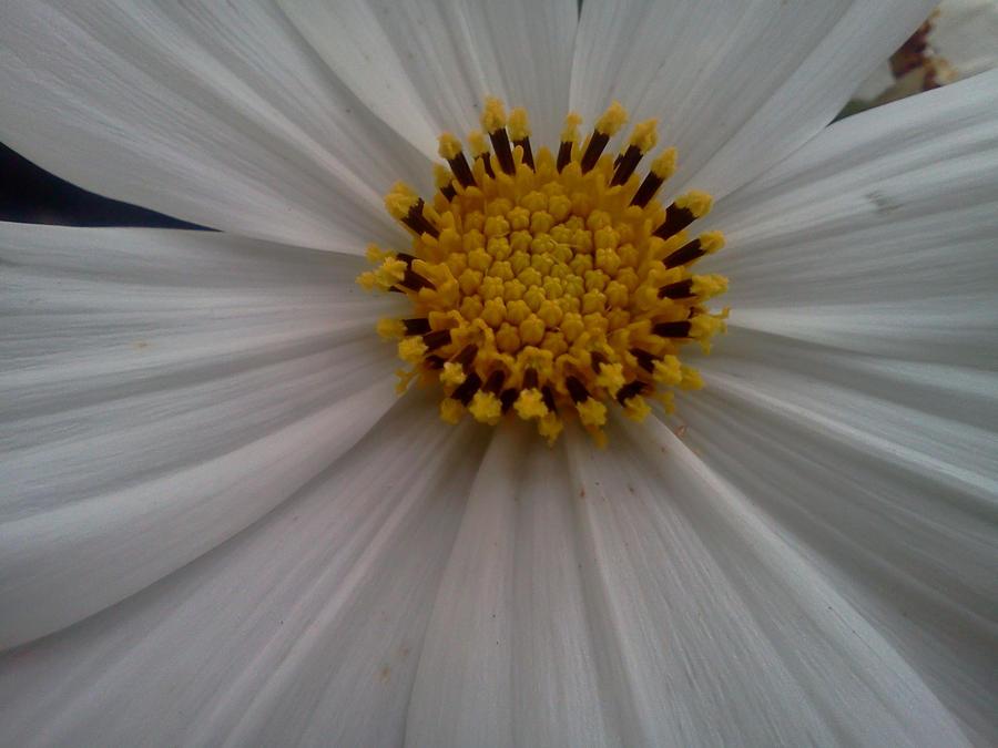 Flower XXVI by XxDarkxDeathxX