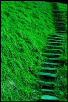 Green Way by NoNicknameNeeded