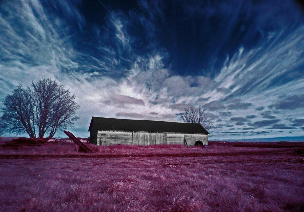 infrared something-scape by foodshelf