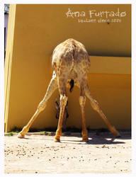 Mrs. Giraffe. by LilMissTake