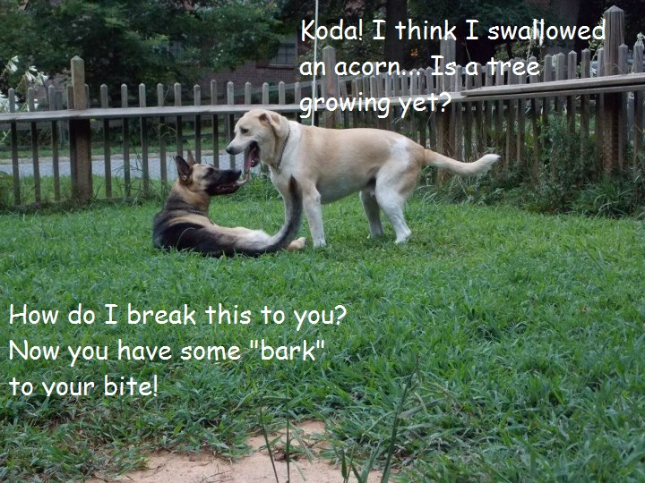 Had some fun with captions! - German Shepherd Dog Forums