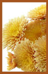 flowers by GoldenWapiti