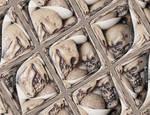 Reflected Skulls