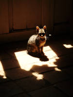 In the sunlight shadow.