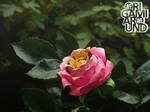Origami pink rose