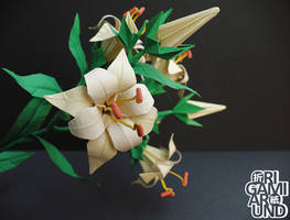 Origami lily with black background