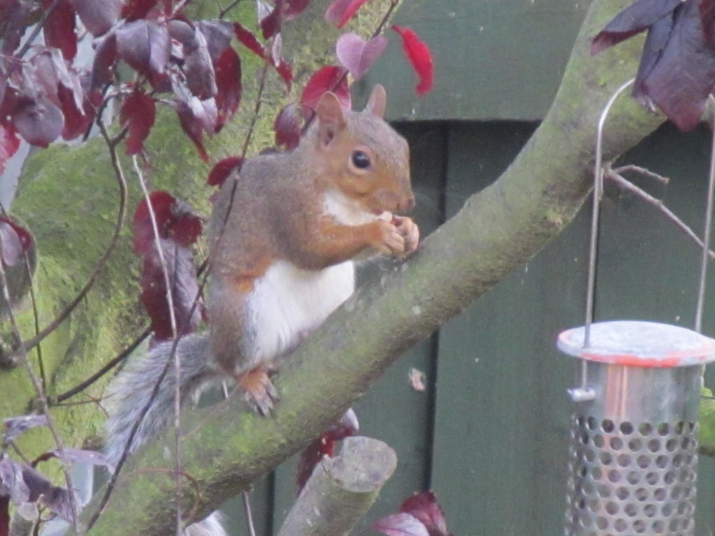 Squirrel Nutkins 02 by Skargill
