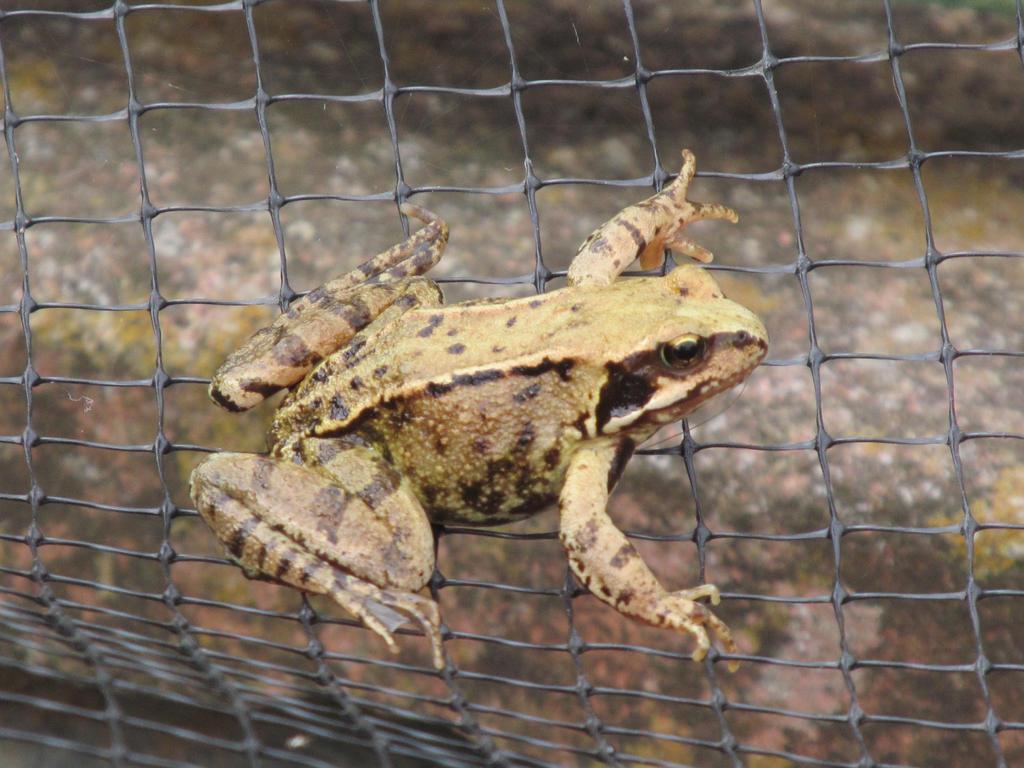 Frogger by Skargill