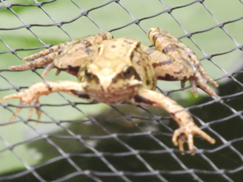 Frogger 2 by Skargill