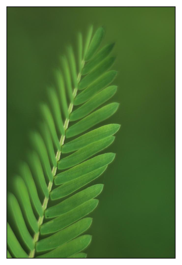 Green Passion by Kelyen