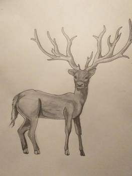 deer study 2