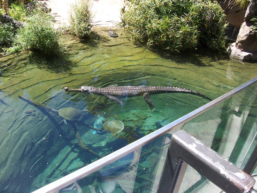 Crocodile at the san diego zoo by silvermoonlight217 on deviantart - Monster high wallpaper border ...