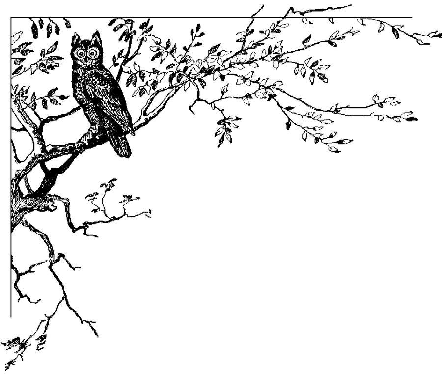 Image Result For Owl Coloring Page