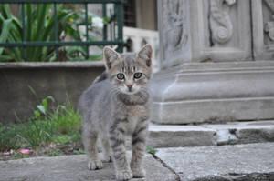 a cat in suleymaniye by zorker