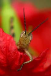 Hello, cricket by amorphouskat